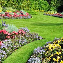 trawniki-ozdobne